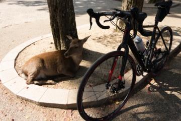 奈良までサイクリング