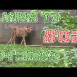 『LINKS TV投稿しました、先週&今週の放送 ほか』の画像
