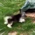 うちのイヌが庭で遊んでいた。ウサギと一緒に過ごしすぎたようです → こうなる…