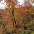 柴犬と暮らす山好きフライ人日記