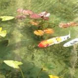 『お正月の「モネの池」(岐阜県関市板取)は雪が無くて穏やかですね。これは都会では味わえないですね。』の画像