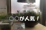 交野市初?な水草専門店『WAKABA』では〇〇が女性に以外と人気があるそうな!