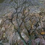 『【動画】 2019年03 中山鬼子母神(RX1 / Zenfone 5z / Xperia Xc)』の画像