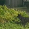 子イヌたちが犬と遊んでいた。ほらこっちだよ♪ → 植木の周りでこうなります…