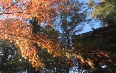 『冬構え7 円覚寺山門脇』の画像