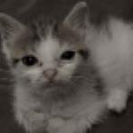 「半年前にボロボロの子猫を拾ってから半年…今は毛並みが自慢の美猫になりました」ビフォー&アフター写真