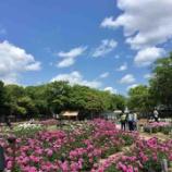 『久宝寺緑地のシャクヤク園』の画像