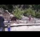 動物園の檻に乱入した男、ヒグマを溺死寸前に(ポーランド)
