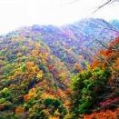 *0397   朝露に にほひそめたる 秋山に しぐれな降りそ ありわたるがね