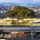 『駅の真ん中に樹齢700年の楠』の画像