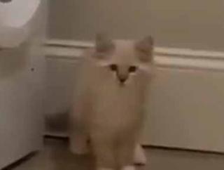 子ネコが洗濯機の隙間に入って行った。あれれ?どこいった? → どうやら「かくれんぼ」のようです…