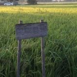 『11年目の収穫祭』の画像
