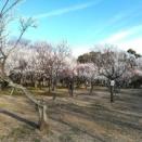 梅の季節♪