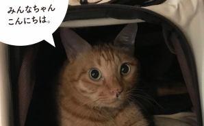"""猫に""""湯たんぽ""""を用意したら"""