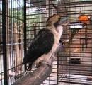逃げ出したカワセミ発見される…マンションのベランダに 管理トラブル続く天王寺動物園