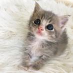「お膝を貸してくださいな」保護された子猫が見つけた居心地の良い場所は人間の膝の上だった(アメリカ)