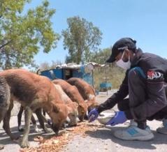 Animal Aid~ロックダウン中のインドの街で、動物たちにエサを届けるボランティアたち