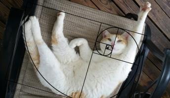 知ってた?猫が完璧な黄金比を持つ動物だったってこと(画像あり)