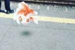いま話題のポケモンGO。河内磐船駅でやってみた!~その他周辺スポットにも結構おるみたい~