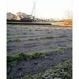 『霜降りの朝』の画像