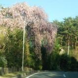『春の蔵開きイベントレポート』の画像
