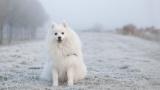 【悲報】イヌの散歩に行ったワイ、コンビニに犬を置き忘れる