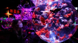 【東京】「アートアクアリウム美術館」の金魚の飼育状態が酷すぎると問題に