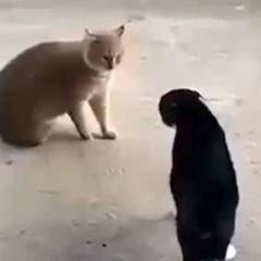 2匹のネコがケンカしそうだ。ちょ、お前たち! → 子犬はこうなっちゃう…