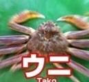 【朗報】タコvsイカ タコの圧勝だった