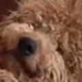 【イヌ】 赤ちゃんはモフモフに包まれて眠っていた。この子は私が守ります → 仲良しなふたりはこんな感じ…