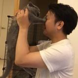 『飼い猫 チョビ日記① 〜拭えぬ距離感〜』の画像