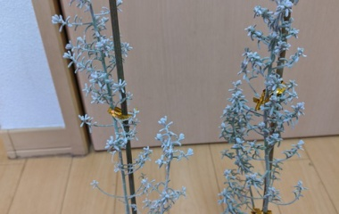 『《園芸》 花騎士団長のド素人園芸日誌【14】』の画像