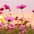 この広い世界で「愛という名の花」を咲かせるために...*