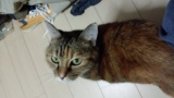 飼い猫が12歳になったんだが(※画像あり)