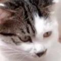 ネコに犬の赤ちゃんがくっついていた。かわいいにゃ♪ → 猫は優しくこうした…