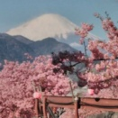 2月25日 今日の業務予定と富士山とクロッカス