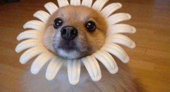かわいいいと思う犬の画像を貼っていくスレ