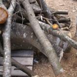 『木を伐る』の画像