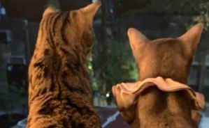 猫の可愛い後ろ姿に「キュン死」