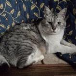 『猫の兄弟げんか』の画像