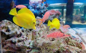 子供も喜んだ「京都水族館」をルポ