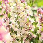 『【ピノ子日記】徒然なるままに庭の四季を愉しむ』の画像