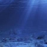 『【海底のミステリー】海の底で作られる「ミステリーサークル」の謎を追え』の画像