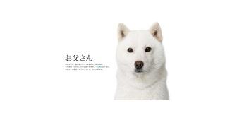 いる!いらね?iPhone 3GS 16GBを12月4日から実質負担0円!