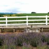 『【北海道ひとり旅】上川の旅『新栄の丘』朝早い牧場の風景』の画像