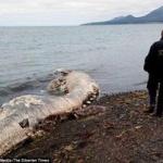 【画像】ロシアに謎の巨大生物の死骸が打ち上げられる!氷漬けにされていたマンモス説も。
