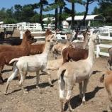 『【旅行】那須アルパカ牧場』の画像