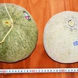 『国東の食環境(132)メロン』の画像