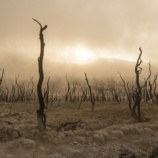 『南アフリカ1000年に一度の大干ばつ中』の画像