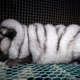 『毛皮輸入大国日本と毛皮から脱却する企業』の画像